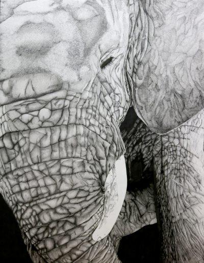 Best of Show: Elephant, pen and ink, Clara Bensimon, Riverwood High School Junior, Dana Munson instructor